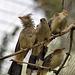 Die 3 vom Ast und der 4. Vogel (Wilhelma)