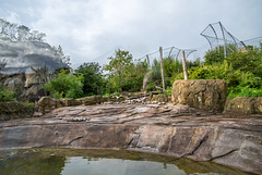 First part of the tiger compound at Chester Zoo