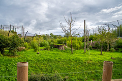 Second part of the tiger compound at Chester Zoo