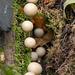 Fungi88