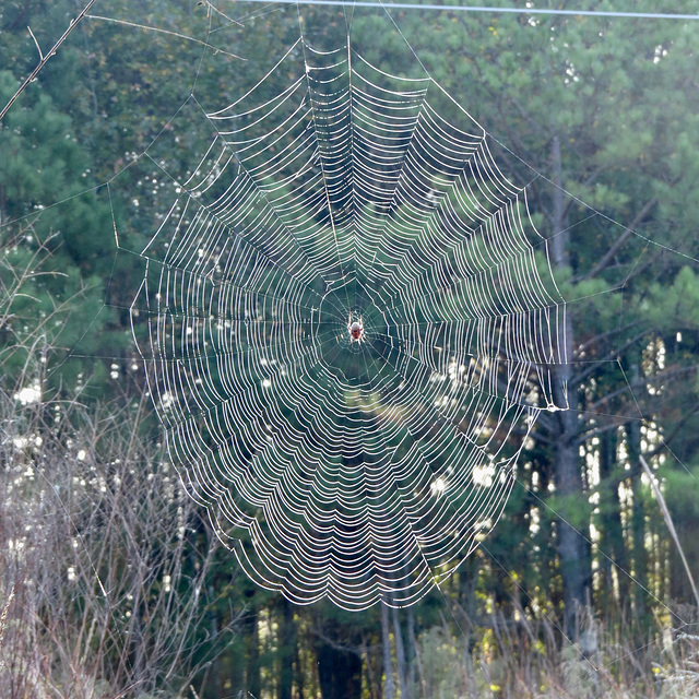 Spider web on a dewy morning