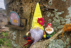 Wee Gonk and Wee Gnome in the Bole of a Tree