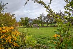 Zebra compound at Chester Zoo