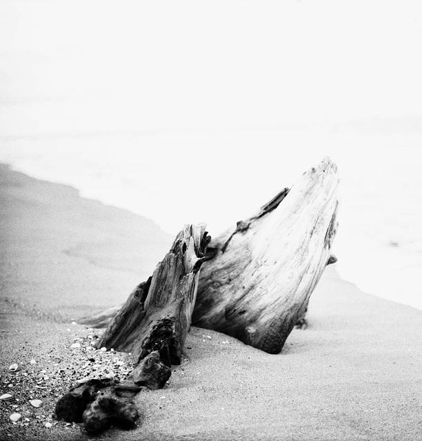 Seaside Dreaming About Humpbacks