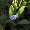 Three Woodland Flowers