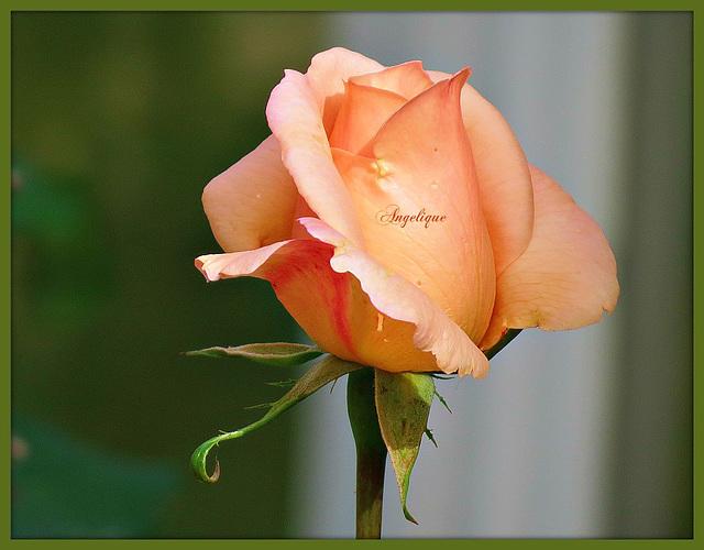 Bonne journée et bon we à vous !