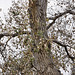 Barking Up the Right Tree – Desert Botanical Garden, Papago Park, Phoenix, Arizona