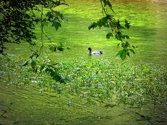 refreshing green