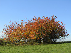 feurig roter Herbst