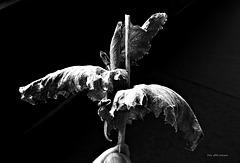 Blätter - leaves
