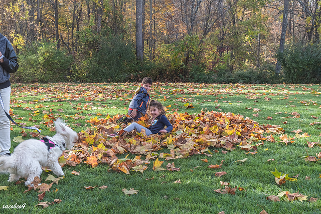 Kaylin, Adam and the dog, wallowing in the Autumn leaves