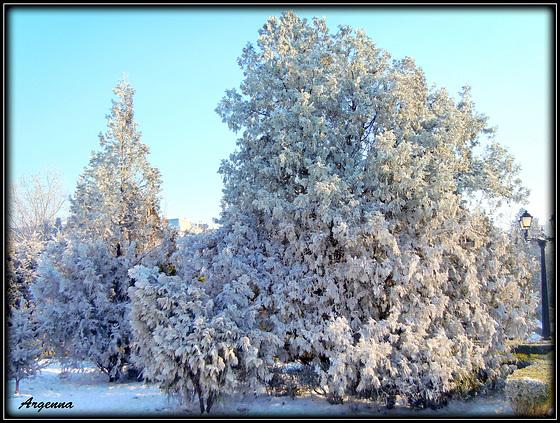 White winter lace