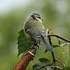 Bird in the Birch