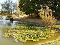 Parc Jean Perdrix à Valence (26)
