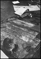 La solitude du chat sans maison (1971)