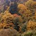 couleurs d'automne Cochem