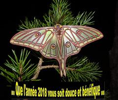 Isabelle de France. Vœux 2018.