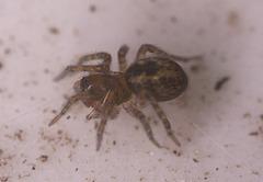 SpiderIMG 1640v2