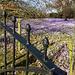 Purple Blanket behind the Gate...
