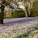 It's all Purple and White in the Orchard...