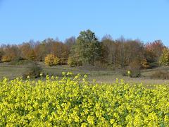 Münchshofener Berg im Herbst