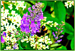 Gathering Nectar.
