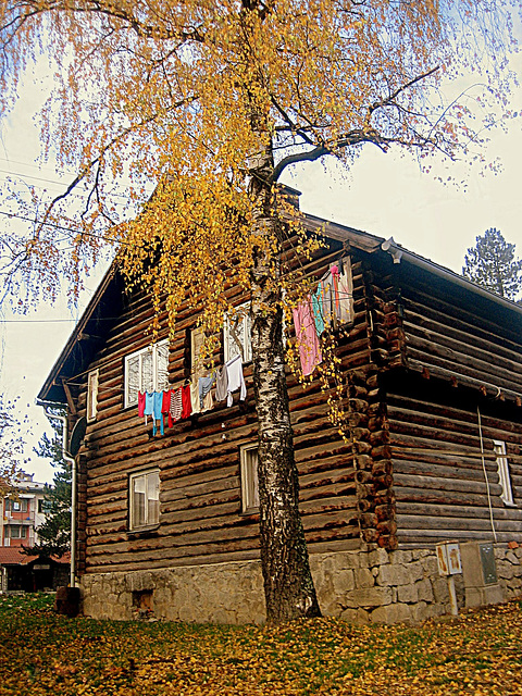 From the neighborhood -  Autumn