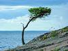 Lake Nipissing - Granite vegetation (PiP)