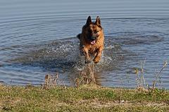 Zwemmen, jaaaaa!