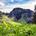 Grander Alp, Tyrol