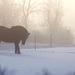 Maurice Carême : Le Brouillard