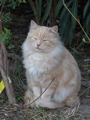 ...chat abandonné...