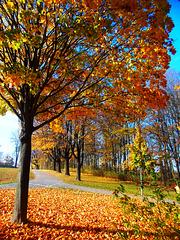 Herbsttag 08