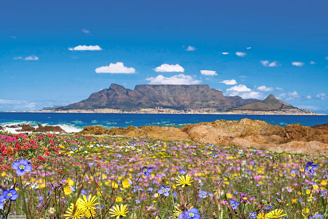 Facing Cape Town and Table Mountain