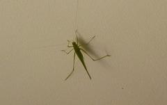 Certains ont des araignées dans le plafond ..Moi )))