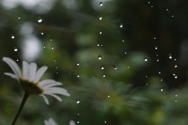 Erste Regentropfen ...