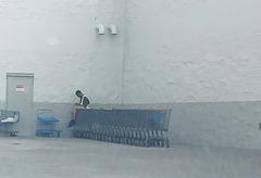 Break time, Walmart