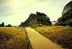 SUNDOG AT THE BEACH