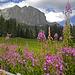 Alta Badia in fiore