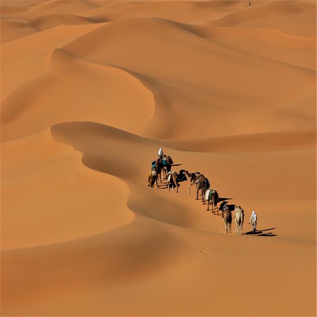 """""""Ce qui embellit le désert, c'est qu'il cache un puits quelque part"""" - Antoine de Saint-Exupéry"""