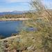 Lake Pleasant & palo verde