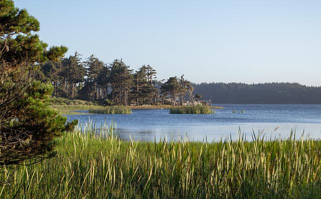 Langlois Floras Lake (#1072)
