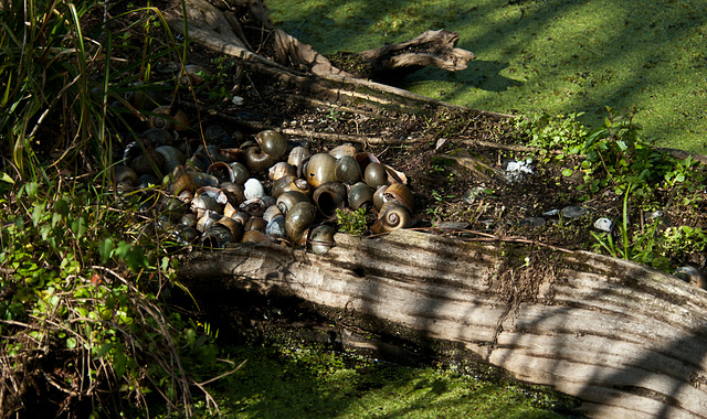 Just Snail Shells