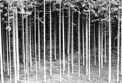 Wald und Bäume -Wood and trees (5 x PiP)