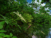 1 (32)...austria loweraustria seebenstein jungle