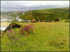 Shetland ponies on Treaga Hill, Portreath - for Pam.