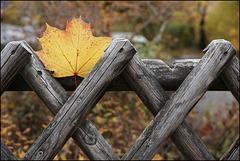 Herbstzaun