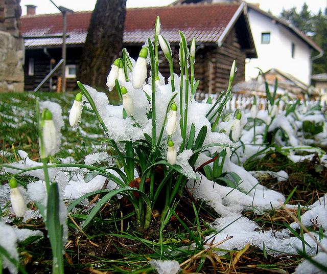Awakening of spring in my backyard