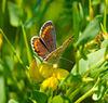Die Wiese lebt (1) - The meadow is living (1)