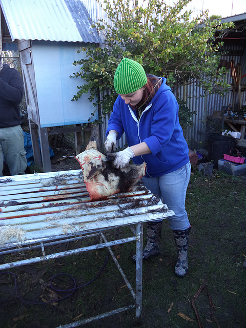 our pig weekend: Friday